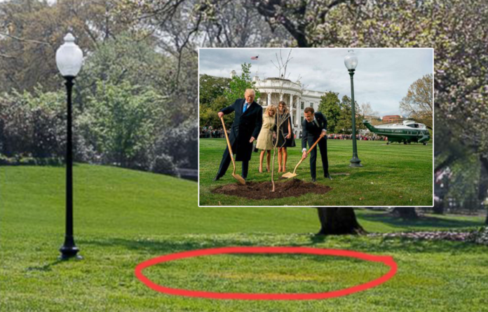 Trump and Macron tree