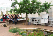Ohalo biophilic learning space