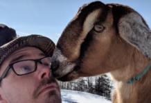 Goat mayor, Lincoln, Fair Haven, Vermont